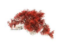Sydeco tropical moss red