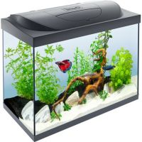 Tetra СтартерЛайн LED Aquarium 80l