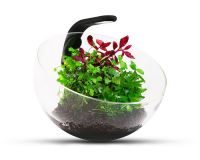 "Decorative aquarium set ""Wabi Set"""